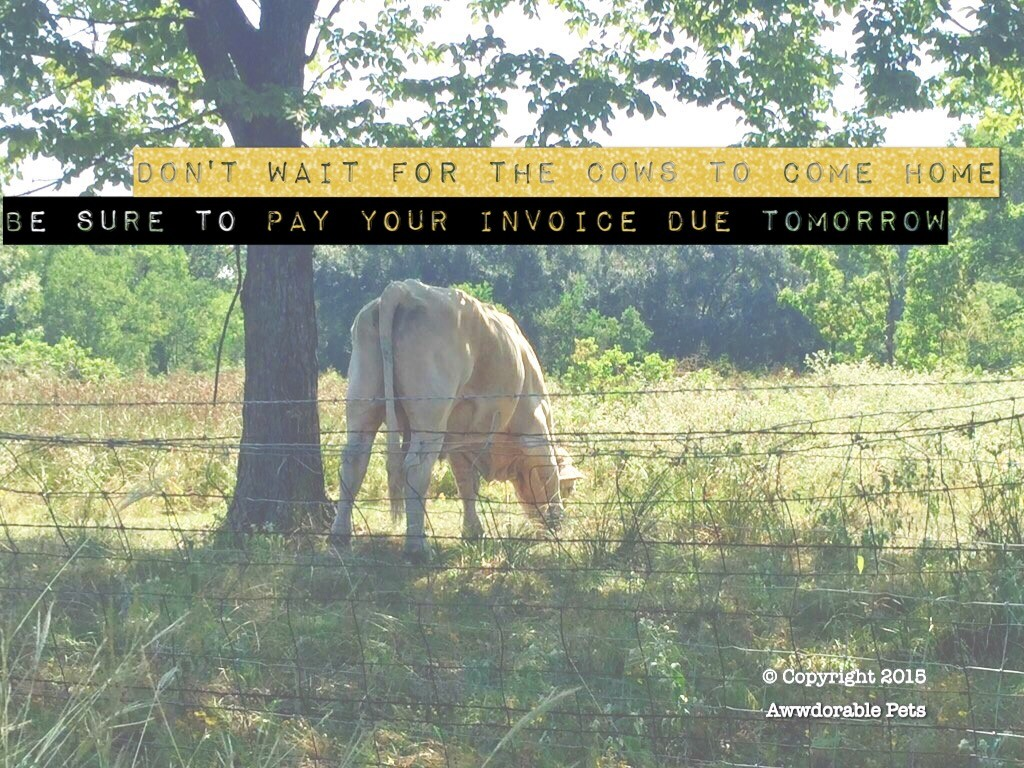 Don't wait for the cows to come home!
